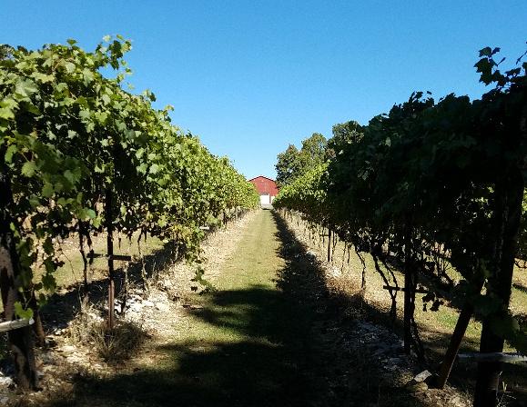 amber-falls-winery
